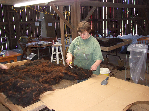 Cleaning Alpaca wool