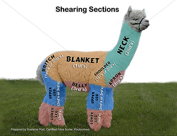 Alpaca Fibre Diagram
