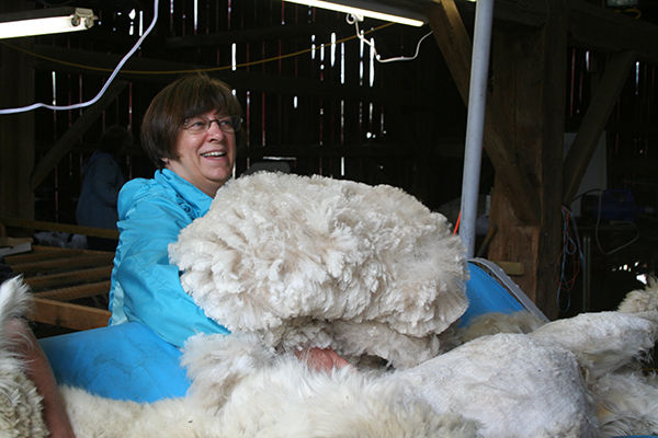 Natural alpaca fibre